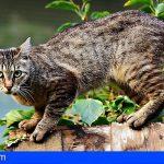 Cesan al concejal de Santa Cruz que declaró a los gatos como plagas que había que exterminar