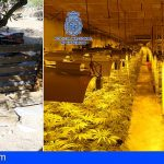 Desmantelan en Toledo la mayor plantación subterránea de marihuana hallada hasta la fecha
