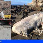 Canarias | Retiran un cachalote muerto de más de 10 toneladas que varó en la playa Medio Almud en Mogán