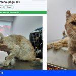 Crea un precedente en Canarias, al pagar por la acogida temporal de gatos callejeros. El Airbnb felino…