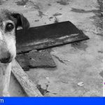 Canarias | Leales.org | La APP Alertcops mejora añadiendo la opción de Maltrato Animal