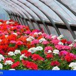 Canarias recibe cerca de un millón de euros para el sector de la flor cortada y la planta ornamental