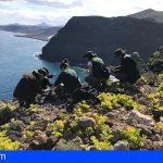 Gran Canaria recoge semillas de tomillones, gildanas y jarillas de rincones emblemáticos, para su preservación