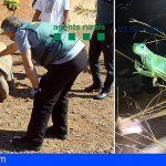 Caen dos grupos criminales dedicados al tráfico de especies protegidas, entre ellos una red de veterinarios
