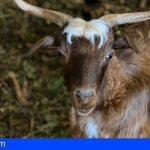 Canarias convoca ayudas de 4,1 millones al consumo de carne fresca de origen local