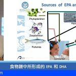 IU-ECOAQUA diserta sobre el omega-3 en el Salón Internacional de Pesca y Mariscos de Taiwán