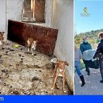 Encuentran en una finca en Madrid a 22 perros en condiciones deplorables y restos cadavéricos de otros 7