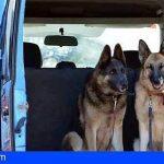 Canarias | Los pastores alemanes de una familia fallecida en un accidente, no quedarán desamparados