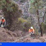 Tenerife | El Cabildo aprueba un plan para sustituir los pinos insignes de los espacios naturales protegidos