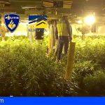 Operación internacional contra el tráfico de marihuana se salda con dos toneladas incautadas