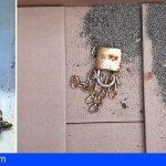 Recuperan en El Médano dos tortugas a las que se les había perforado el caparazón con cadena y candado