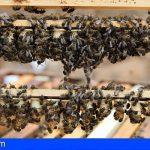 Canarias convoca ayudas para la producción de miel de abeja negra