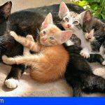 Denuncian la desaparición de una colonia de 27 gatos en Tacoronte