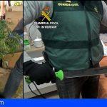Nacional | Desmantelan una red dedicada al tráfico internacional de marihuana