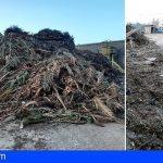 El Complejo Ambiental de Tenerife destina al compostaje los restos de poda y jardinería