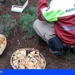 Tenerife recuerda la necesidad de tramitar autorización para la recogida de setas