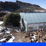 El vivero del Teide protege semillas de más de 200 especies, muchas de ellas en peligro