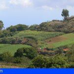 Agricultura convoca ayudas a los productores de cultivos forrajeros destinados a alimentación animal