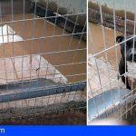 CC-PNC Tenerife: «El Consejo Insular de Protección y Bienestar Animal no se reúne desde hace un año»