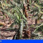 Canarias incrementa en 571.000€ las ayudas a los agricultores afectados por el temporal de febrero de 2020