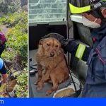 Bomberos de Tenerife rescata a una senderista en Arafo y a un perro en Tacoronte