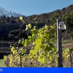 Los premios Agrocanarias se adaptan a la nueva realidad del sector vitivinícola de las islas