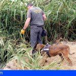 Guardia Civil y Guardias Rurales persiguen en Tenerife el uso de cebos envenenados
