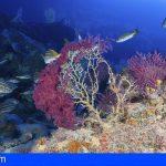 Canarias impulsa el estudio de los ecosistemas marinos profundos de la Macaronesia