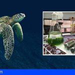 Canarias, referente científico-tecnológico sobre cambio climático y economía azul