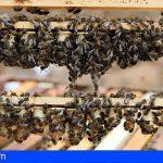Canarias concede 539.000 euros a los productores de miel de abeja negra