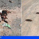 Fuerteventura | Oasis Wildlife denuncia el abandono de animales muertos por parte de vecinos en Goroy