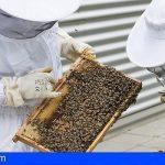 El Cabildo de Tenerife inicia un programa de 14 cursos sobre apicultura, enología y aceite de oliva