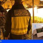 Nacional | 65 detenidos de una red de origen chino dedicada al tráfico internacional de marihuana