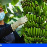 ASPROCAN satisfecho por la unidad del Senado en defensa del Plátano de Canarias