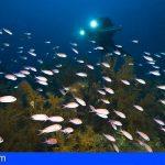 B-CHARMED acerca los bosques de coral negro de Lanzarote a más de 130 jóvenes estudiantes de la isla