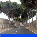 Arona exige al Cabildo un corredor verde en Guargacho, en la vía donde este efectuó la tala de árboles