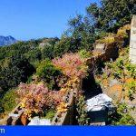 El Cabildo de Tenerife retira 157 toneladas de crásula y pinillo de los espacios naturales protegidos