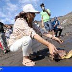 Día Mundial del Medio Ambiente   Suelta en Arico de una tortuga Caretta caretta recuperada en La Tahonilla