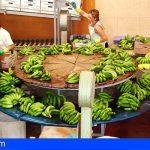 Canarias | La UE decide no aceptar la supresión arancelaria solicitada a favor de la banana