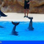 Granadilla | 'Verano Joven' ofrece diferentes iniciativas y salidas a parques acuáticos