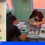 Tenerife | La Tahonilla ingresa siete murciélagos afectados por una trampa para ratones