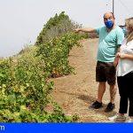 La Palma | El Gobierno y organizaciones agrarias abordan las consecuencias del incendio y el temporal de viento en el campo