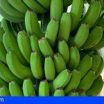 El plátano de Canarias logra enmendar el grave perjuicio de la Ley de la Cadena Alimentaria