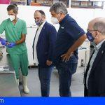 La Red Vigía Canarias ha analizado las causas de la muerte de 767 ejemplares de fauna silvestre