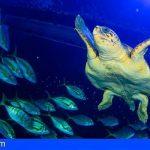 Canarias | Una tortuga encontrada en estado crítico se recupera en Poema del Mar antes de ser devuelta al mar