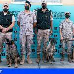 Las Unidades de Guías Caninos escogieron el CIAAD de Adeje para alojar a sus animales durante las jornadas de formación